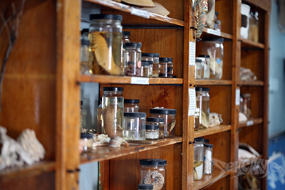 Specimens in the lab museum at Seacamp